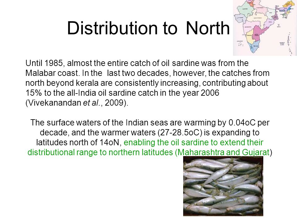 Distribution to North Until 1985, almost the entire catch of oil sardine was from the Malabar coast. In the last two decades, however, the catches fro