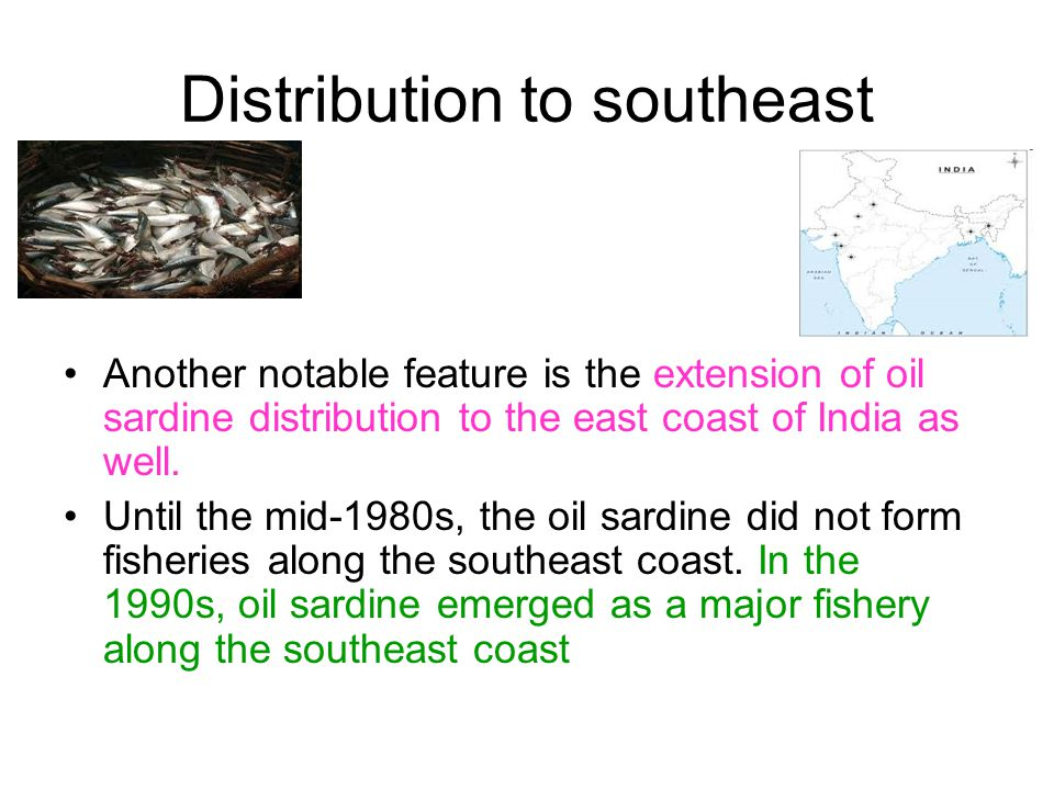 Distribution to southeast Another notable feature is the extension of oil sardine distribution to the east coast of India as well. Until the mid-1980s