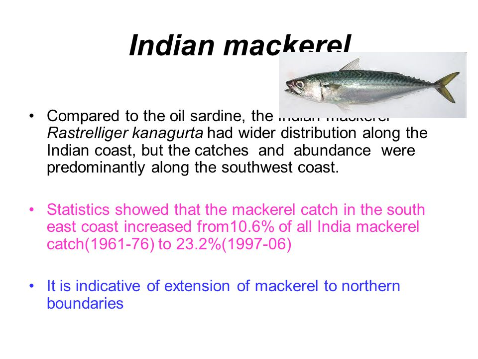 Indian mackerel Compared to the oil sardine, the Indian mackerel Rastrelliger kanagurta had wider distribution along the Indian coast, but the catches