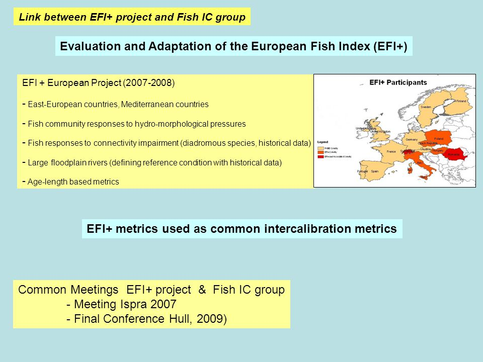 Link between EFI+ project and Fish IC group Common Meetings EFI+ project & Fish IC group - Meeting Ispra 2007 - Final Conference Hull, 2009) EFI + European Project (2007-2008) - East-European countries, Mediterranean countries - Fish community responses to hydro-morphological pressures - Fish responses to connectivity impairment (diadromous species, historical data) - Large floodplain rivers (defining reference condition with historical data) - Age-length based metrics Evaluation and Adaptation of the European Fish Index (EFI+) EFI+ metrics used as common intercalibration metrics