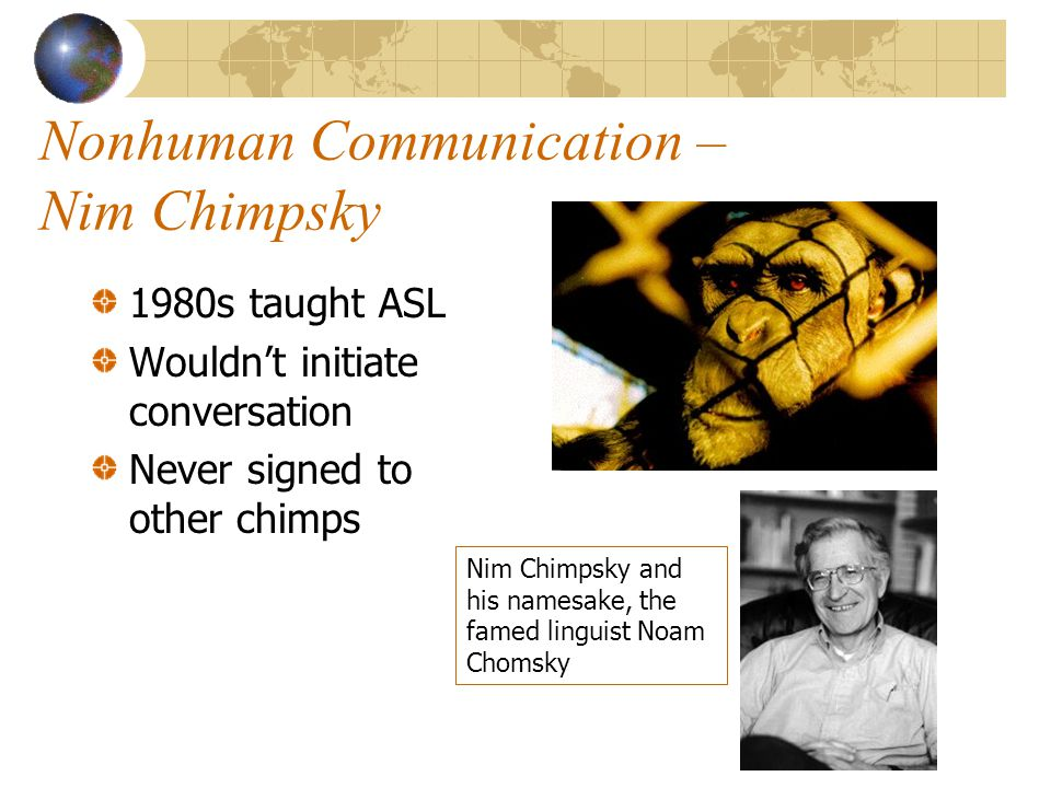 Nonhuman Communication – Nim Chimpsky 1980s taught ASL Wouldn't initiate conversation Never signed to other chimps Nim Chimpsky and his namesake, the famed linguist Noam Chomsky