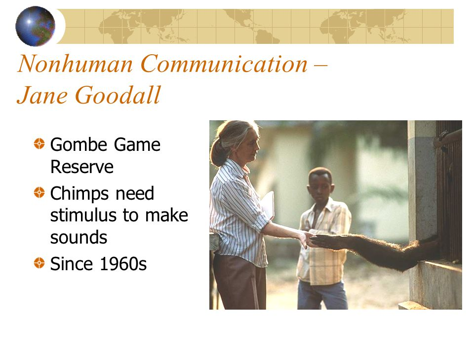 Nonhuman Communication – Jane Goodall Gombe Game Reserve Chimps need stimulus to make sounds Since 1960s
