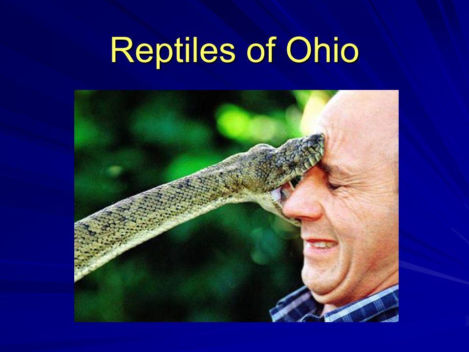 Reptiles of Ohio