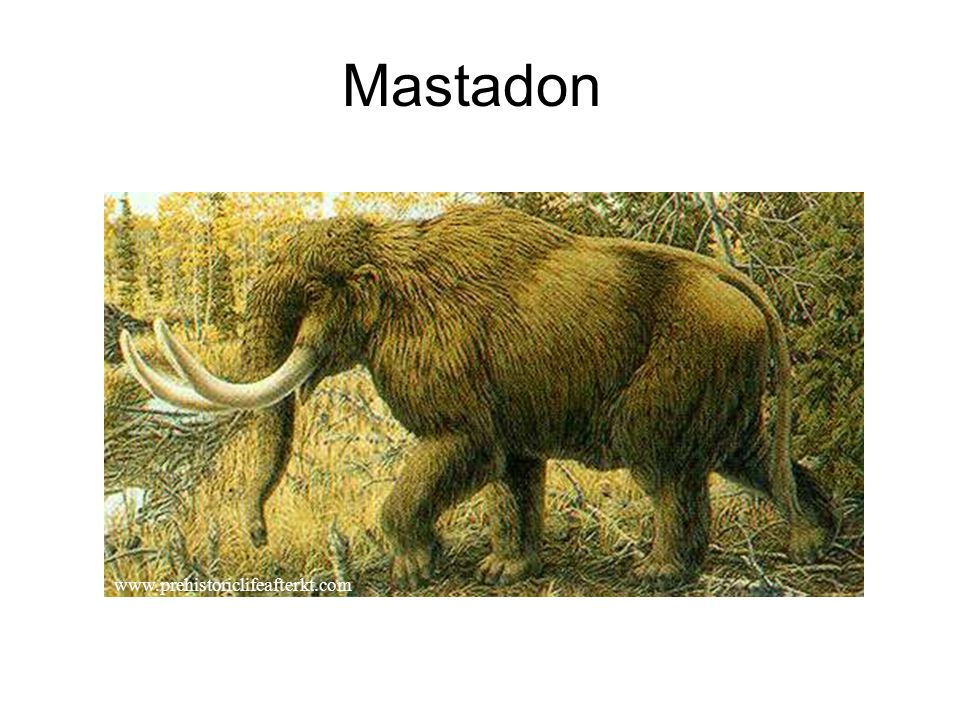Mastadon www.prehistoriclifeafterkt.com