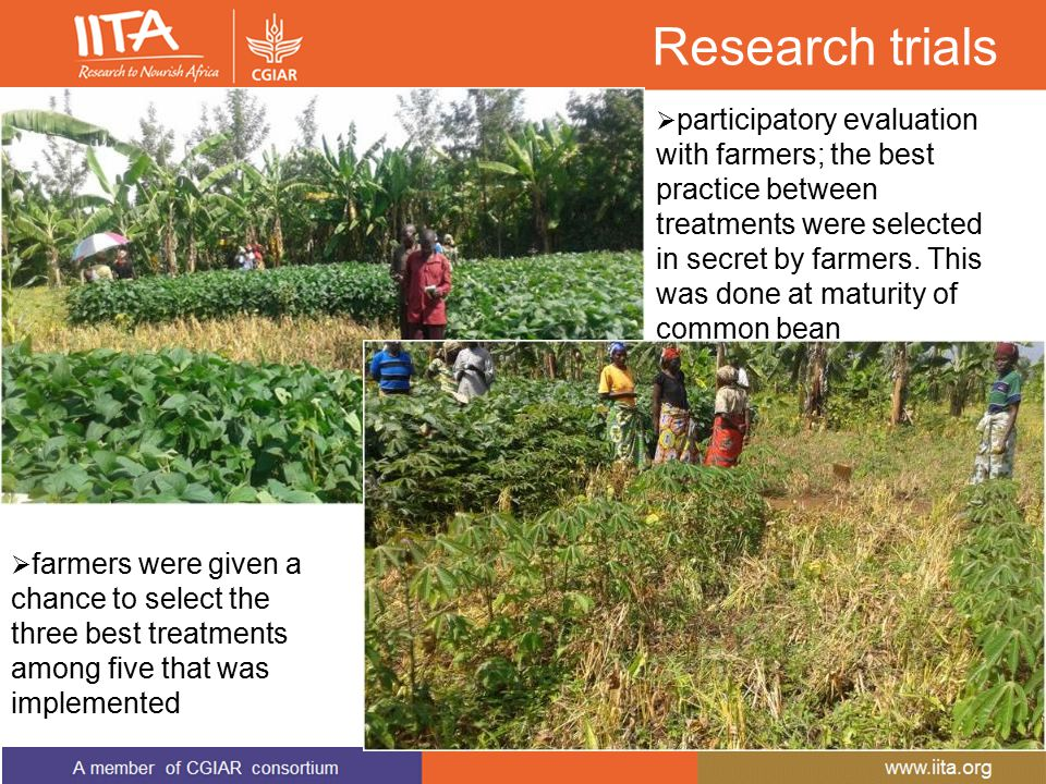 Research trials  participatory evaluation with farmers; the best practice between treatments were selected in secret by farmers. This was done at mat