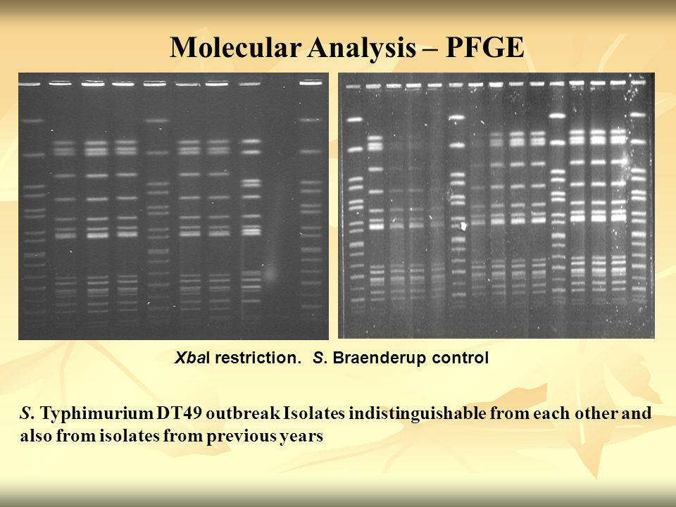 Molecular Analysis – PFGE S. Typhimurium DT49 outbreak Isolates indistinguishable from each other and also from isolates from previous years XbaI rest