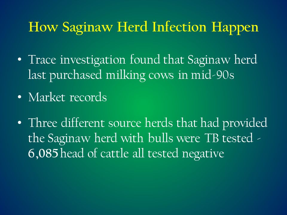 How Saginaw Herd Infection Happen Trace investigation found that Saginaw herd last purchased milking cows in mid-90s Market records Three different source herds that had provided the Saginaw herd with bulls were TB tested - 6,085 head of cattle all tested negative