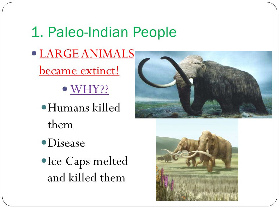 1. Paleo-Indian People LARGE ANIMALS became extinct.