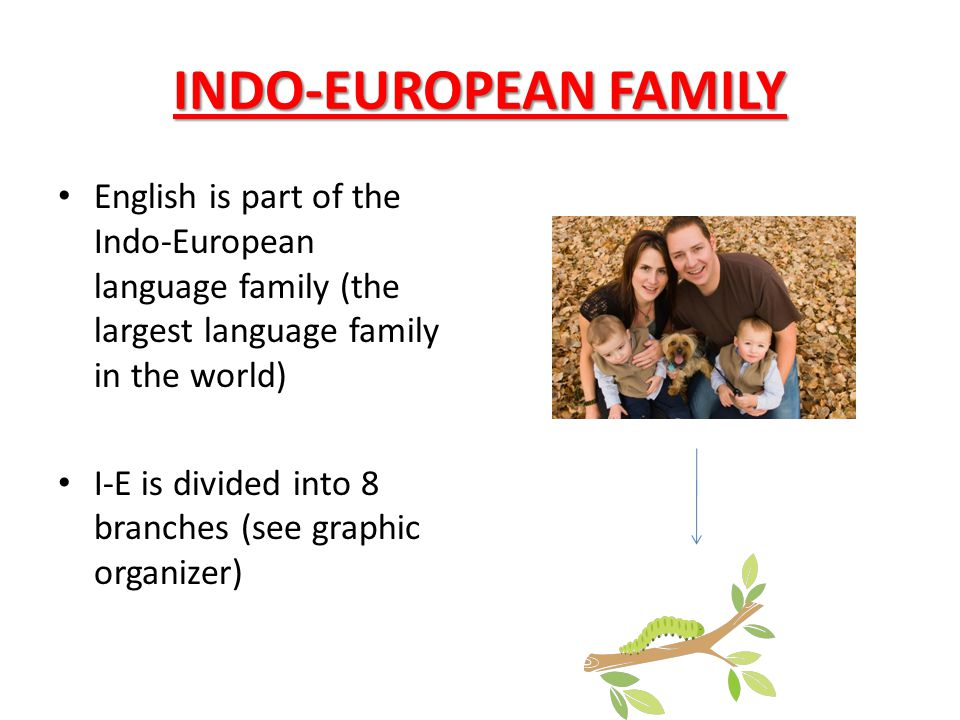 INDO-EUROPEAN FAMILY English is part of the Indo-European language family (the largest language family in the world) I-E is divided into 8 branches (s