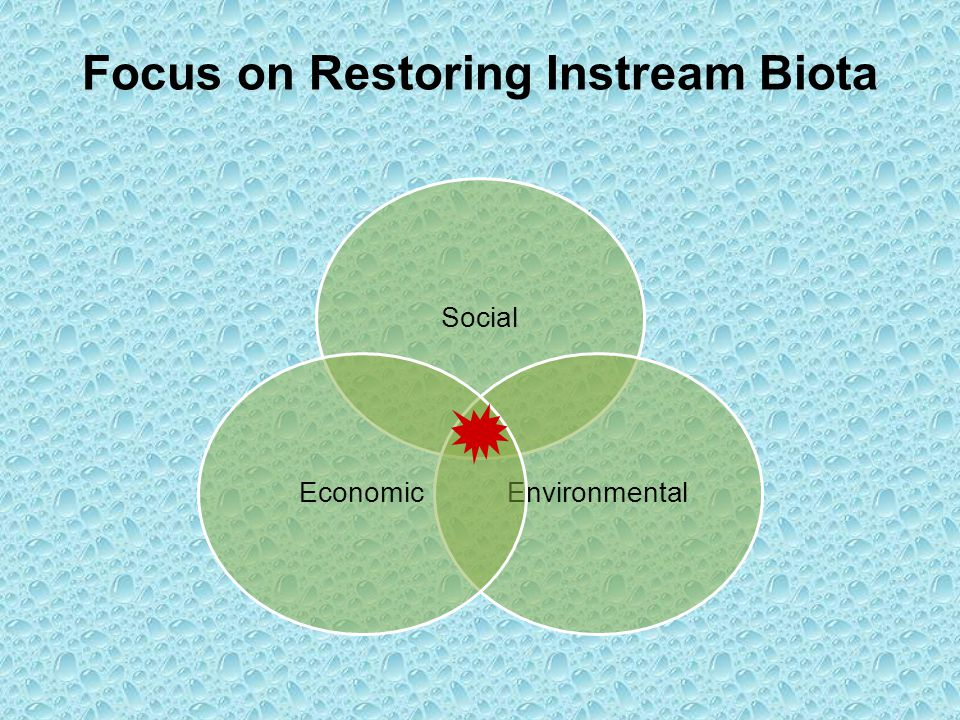 Focus on Restoring Instream Biota Social EnvironmentalEconomic