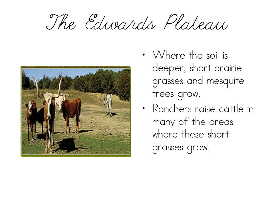 The Edwards Plateau Where the soil is deeper, short prairie grasses and mesquite trees grow. Ranchers raise cattle in many of the areas where these sh