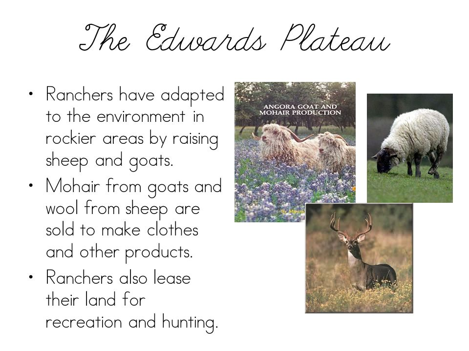 The Edwards Plateau Ranchers have adapted to the environment in rockier areas by raising sheep and goats. Mohair from goats and wool from sheep are so