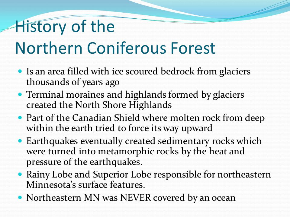 History of the Northern Coniferous Forest Is an area filled with ice scoured bedrock from glaciers thousands of years ago Terminal moraines and highla