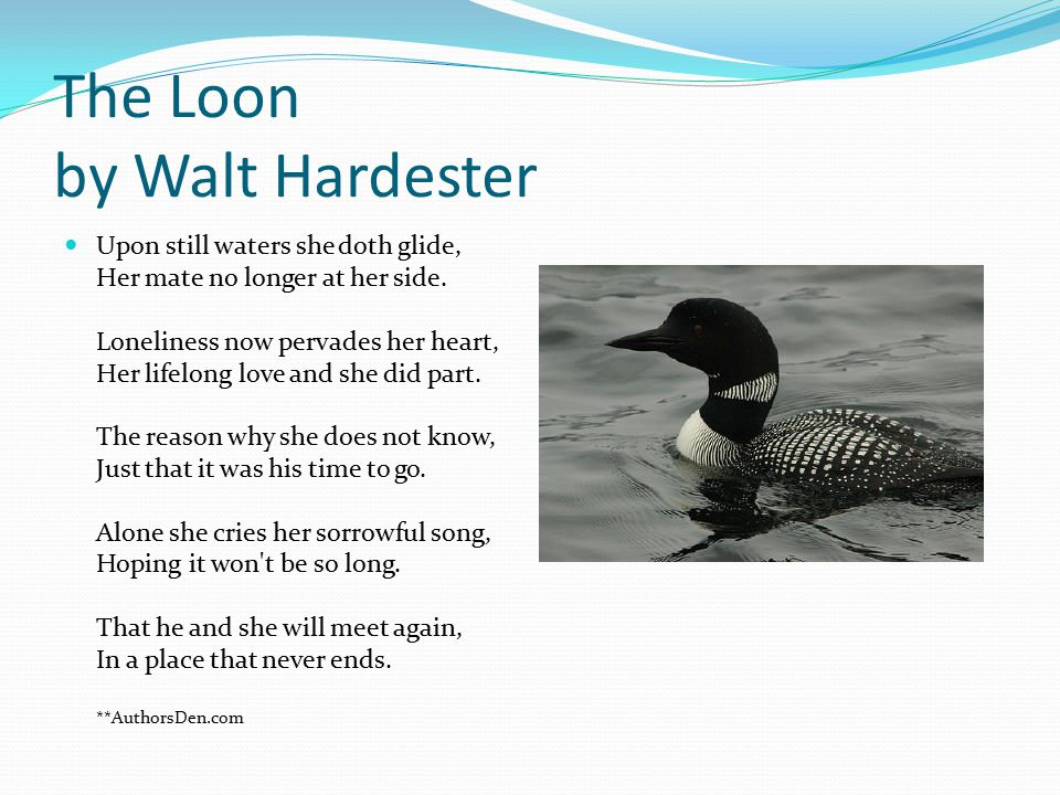 The Loon by Walt Hardester Upon still waters she doth glide, Her mate no longer at her side. Loneliness now pervades her heart, Her lifelong love and