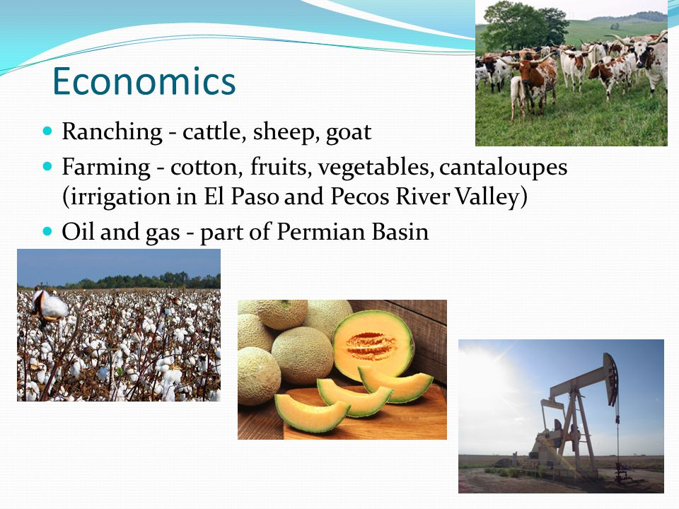 Economics Ranching - cattle, sheep, goat Farming - cotton, fruits, vegetables, cantaloupes (irrigation in El Paso and Pecos River Valley) Oil and gas - part of Permian Basin