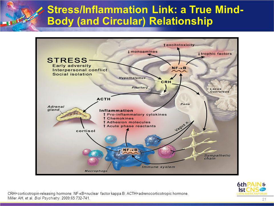 Stress/Inflammation Link: a True Mind- Body (and Circular) Relationship CRH=corticotropin-releasing hormone; NF-κB=nuclear factor kappa B; ACTH=adreno