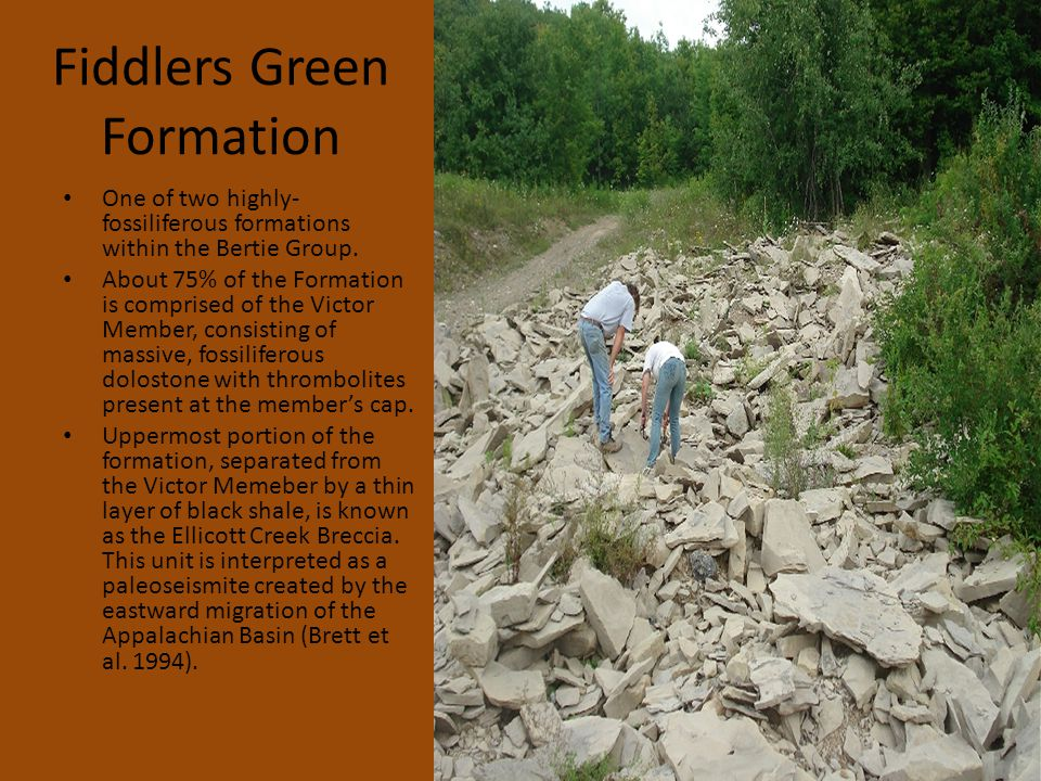 Fiddlers Green Formation One of two highly- fossiliferous formations within the Bertie Group.