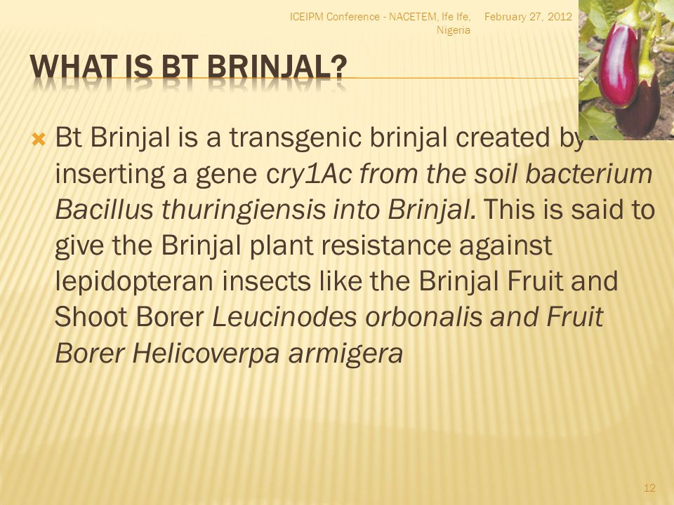  Bt Brinjal is a transgenic brinjal created by inserting a gene cry1Ac from the soil bacterium Bacillus thuringiensis into Brinjal. This is said to g