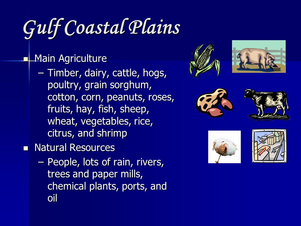 Gulf Coastal Plains Main Agriculture Main Agriculture –Timber, dairy, cattle, hogs, poultry, grain sorghum, cotton, corn, peanuts, roses, fruits, hay, fish, sheep, wheat, vegetables, rice, citrus, and shrimp Natural Resources Natural Resources –People, lots of rain, rivers, trees and paper mills, chemical plants, ports, and oil