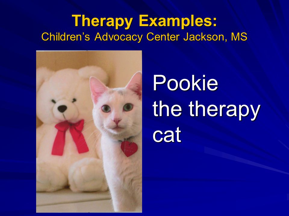 Pookie the therapy cat Therapy Examples: Children's Advocacy Center Jackson, MS