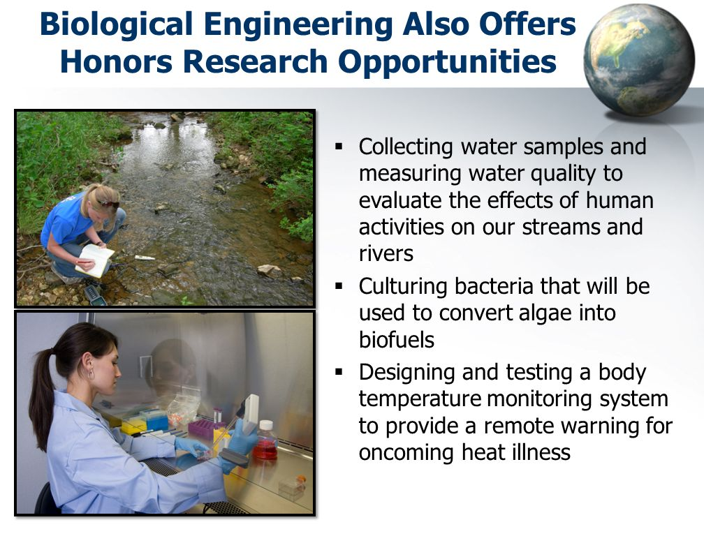 Biological Engineering Also Offers Honors Research Opportunities  Collecting water samples and measuring water quality to evaluate the effects of human activities on our streams and rivers  Culturing bacteria that will be used to convert algae into biofuels  Designing and testing a body temperature monitoring system to provide a remote warning for oncoming heat illness