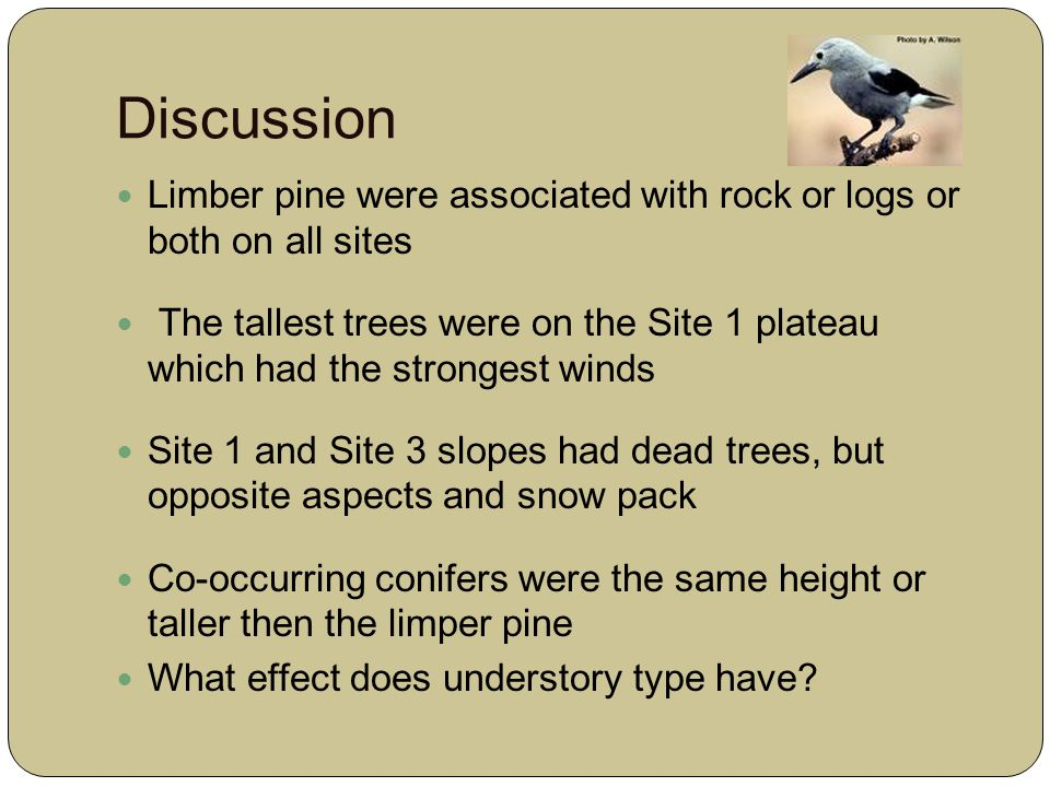 Discussion Limber pine were associated with rock or logs or both on all sites The tallest trees were on the Site 1 plateau which had the strongest winds Site 1 and Site 3 slopes had dead trees, but opposite aspects and snow pack Co-occurring conifers were the same height or taller then the limper pine What effect does understory type have