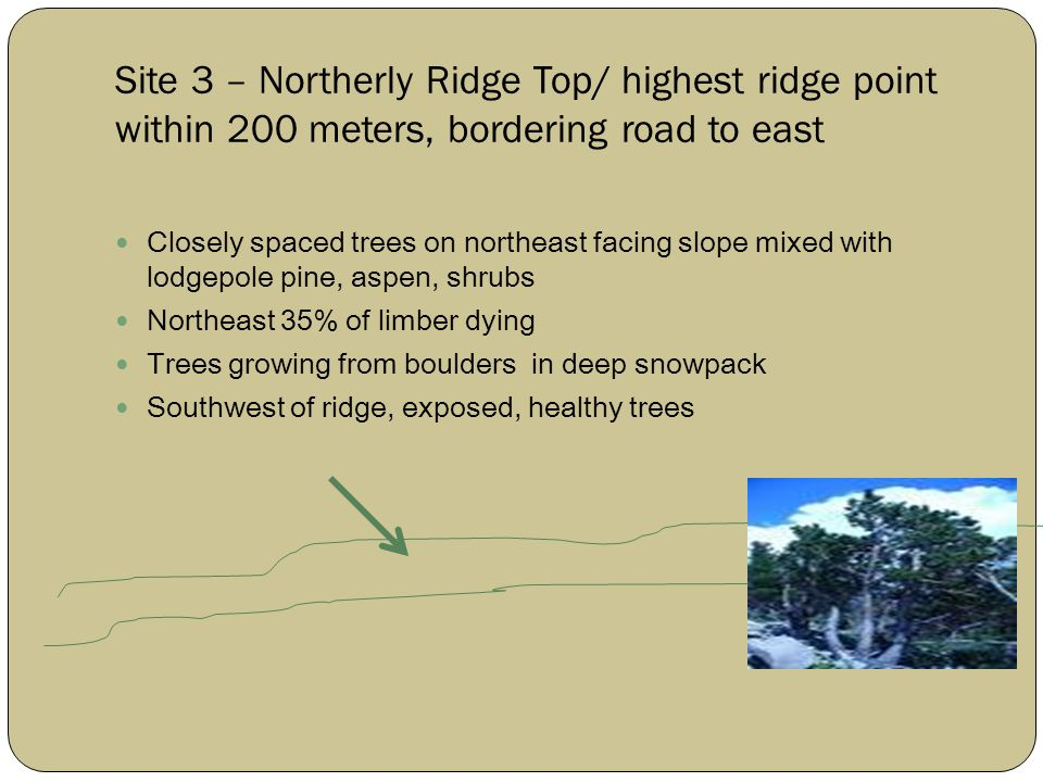 Site 3 – Northerly Ridge Top/ highest ridge point within 200 meters, bordering road to east Closely spaced trees on northeast facing slope mixed with lodgepole pine, aspen, shrubs Northeast 35% of limber dying Trees growing from boulders in deep snowpack Southwest of ridge, exposed, healthy trees