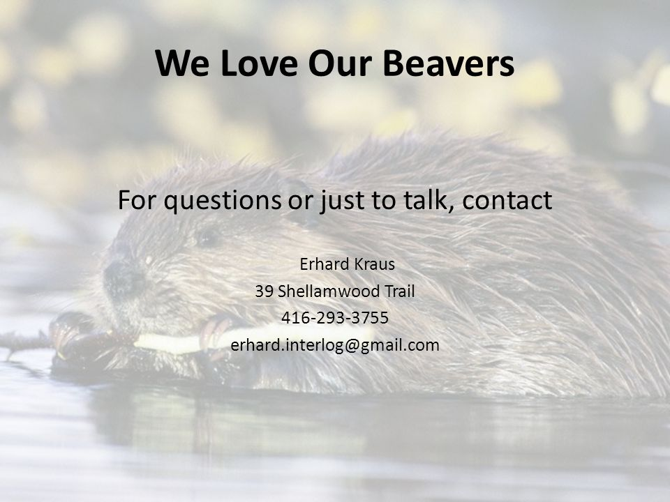 We Love Our Beavers For questions or just to talk, contact Erhard Kraus 39 Shellamwood Trail 416-293-3755 erhard.interlog@gmail.com