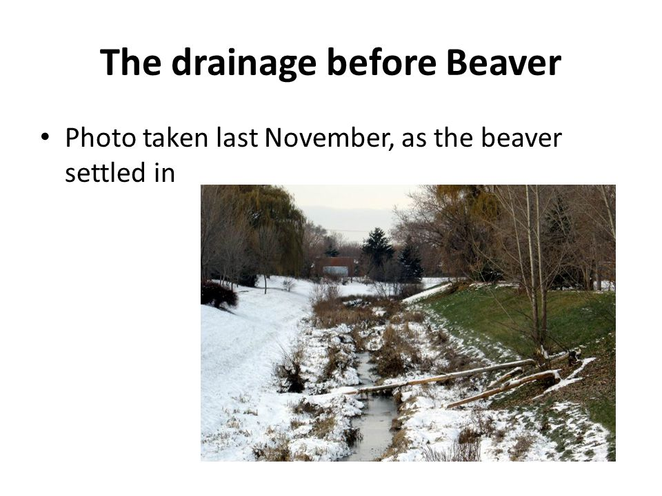 How to Keep Our Beavers Protect City's Trees from beavers' appetite Bring Schools on Board Advise Neighbours of benefits and ways to protect their trees Ensure food supply for long term Bring city departments on board to ensure a successful future