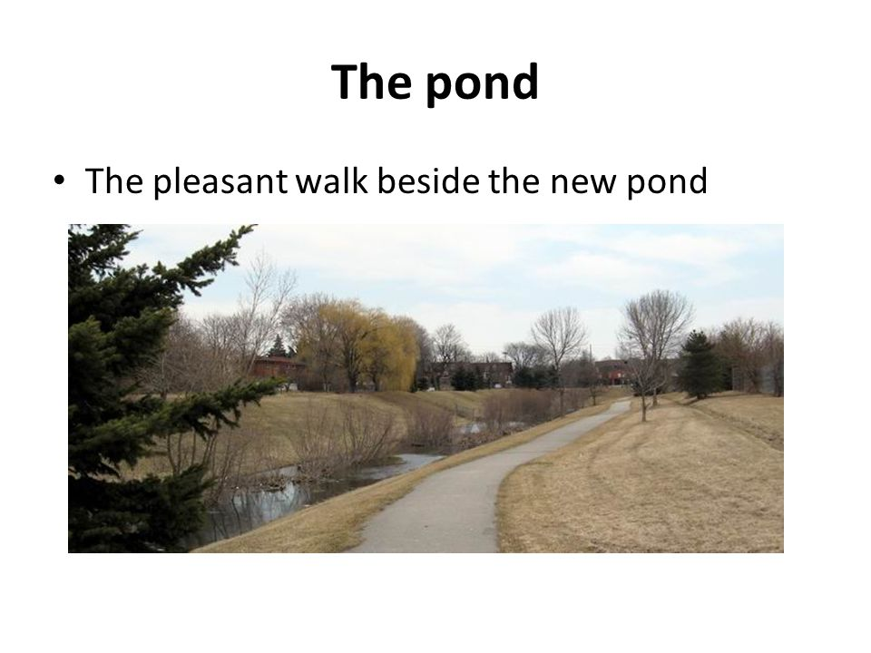 The pond The pleasant walk beside the new pond