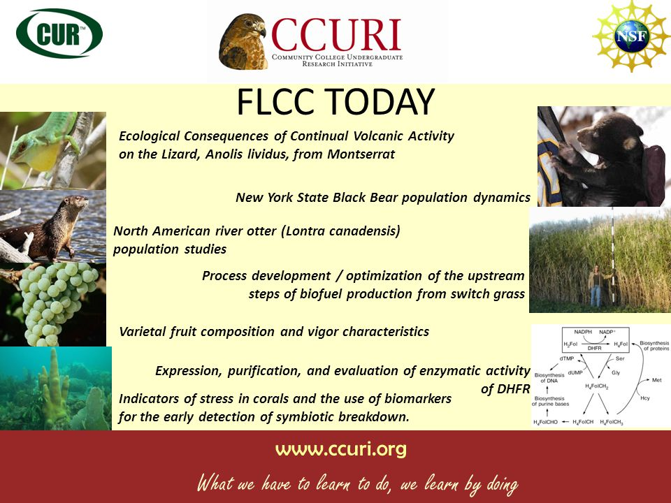 www.ccuri.org What we have to learn to do, we learn by doing Benefits of UR.