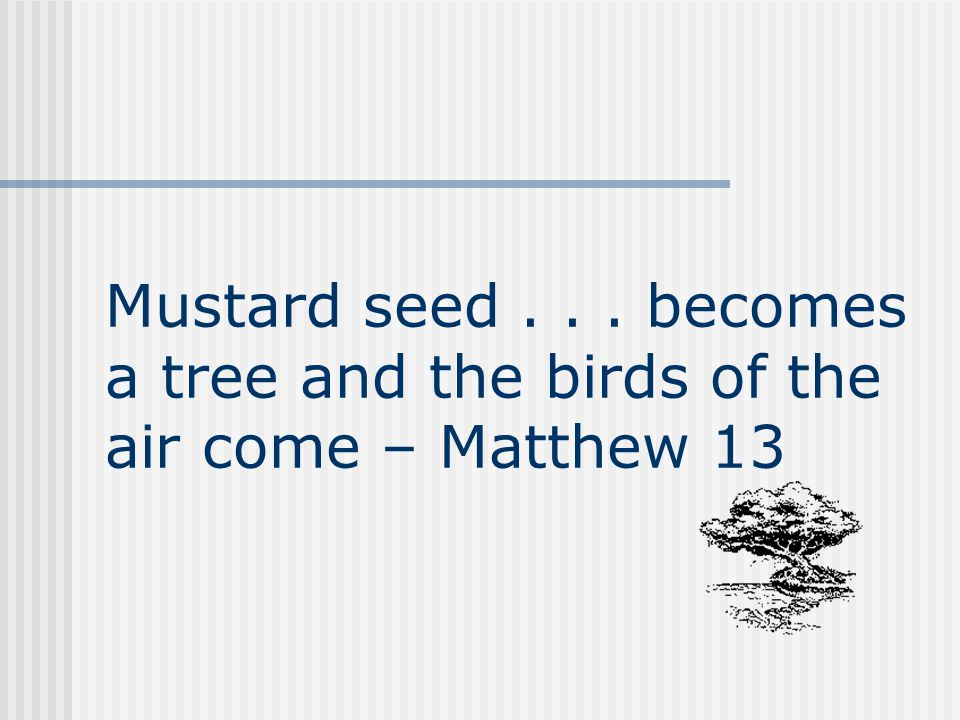 Mustard seed... becomes a tree and the birds of the air come – Matthew 13