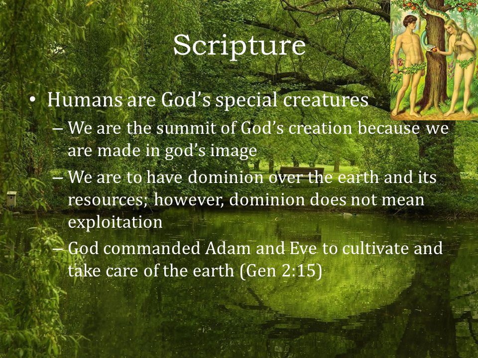 Scripture Humans are God's special creatures – We are the summit of God's creation because we are made in god's image – We are to have dominion over the earth and its resources; however, dominion does not mean exploitation – God commanded Adam and Eve to cultivate and take care of the earth (Gen 2:15)