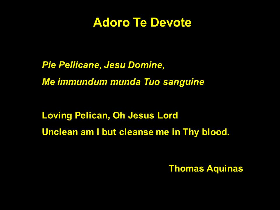 Adoro Te Devote Pie Pellicane, Jesu Domine, Me immundum munda Tuo sanguine Loving Pelican, Oh Jesus Lord Unclean am I but cleanse me in Thy blood.
