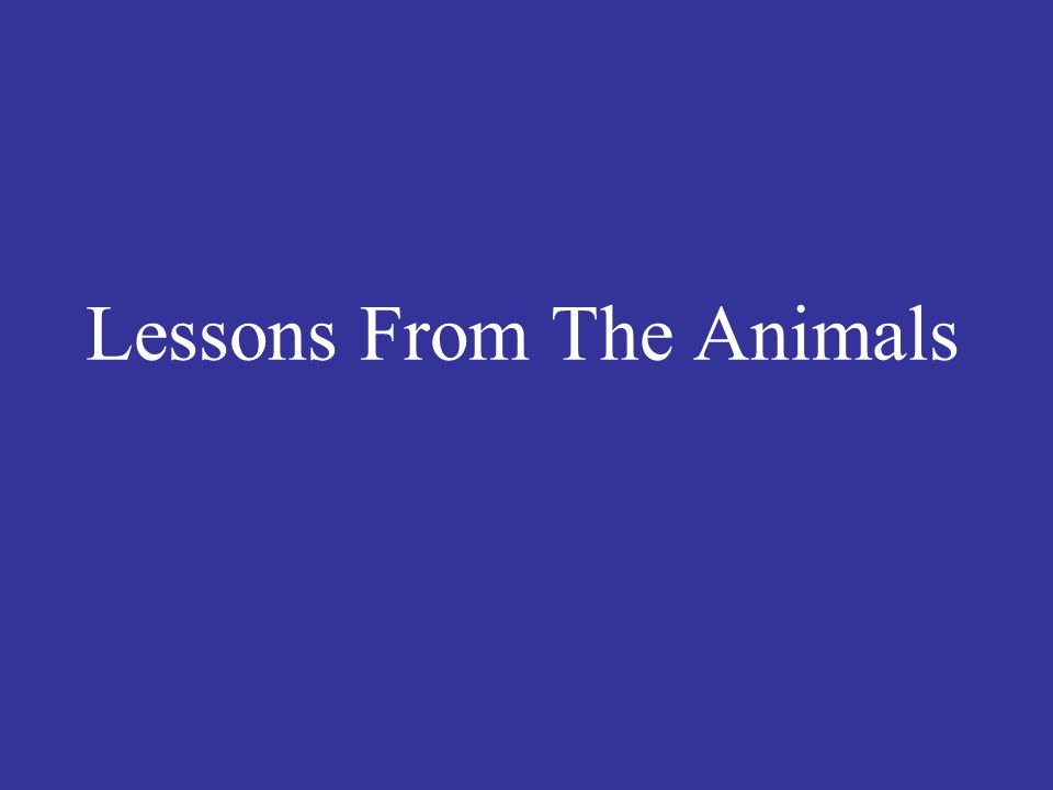 Lessons From The Animals
