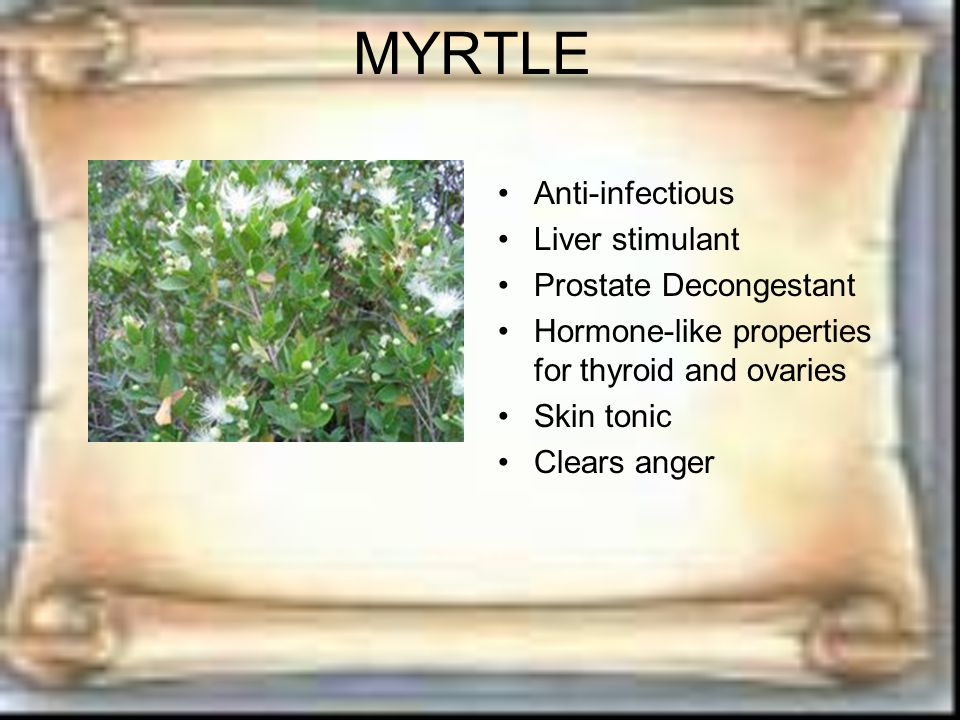 MYRTLE Anti-infectious Liver stimulant Prostate Decongestant Hormone-like properties for thyroid and ovaries Skin tonic Clears anger