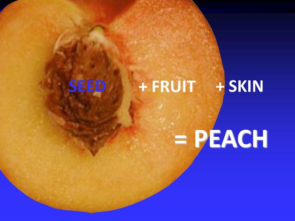 SEED + FRUIT + SKIN = PEACH
