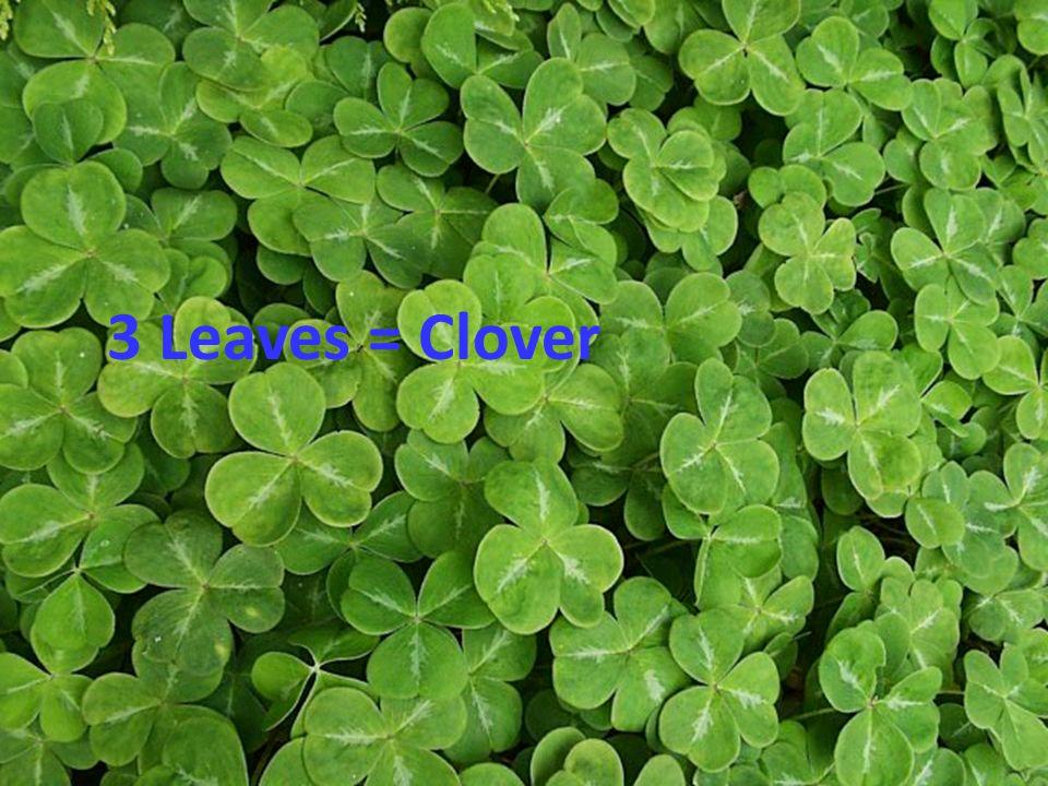 3 Leaves = Clover