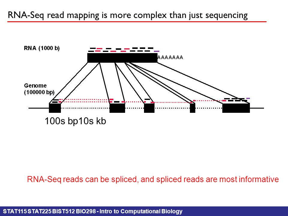 STAT115 STAT225 BIST512 BIO298 - Intro to Computational Biology RNA-Seq read mapping is more complex than just sequencing 10s kb100s bp RNA-Seq reads can be spliced, and spliced reads are most informative