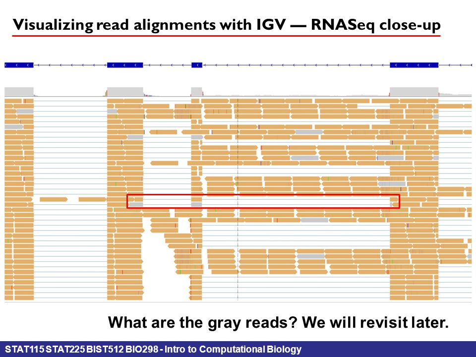 STAT115 STAT225 BIST512 BIO298 - Intro to Computational Biology Visualizing read alignments with IGV — RNASeq close-up What are the gray reads.