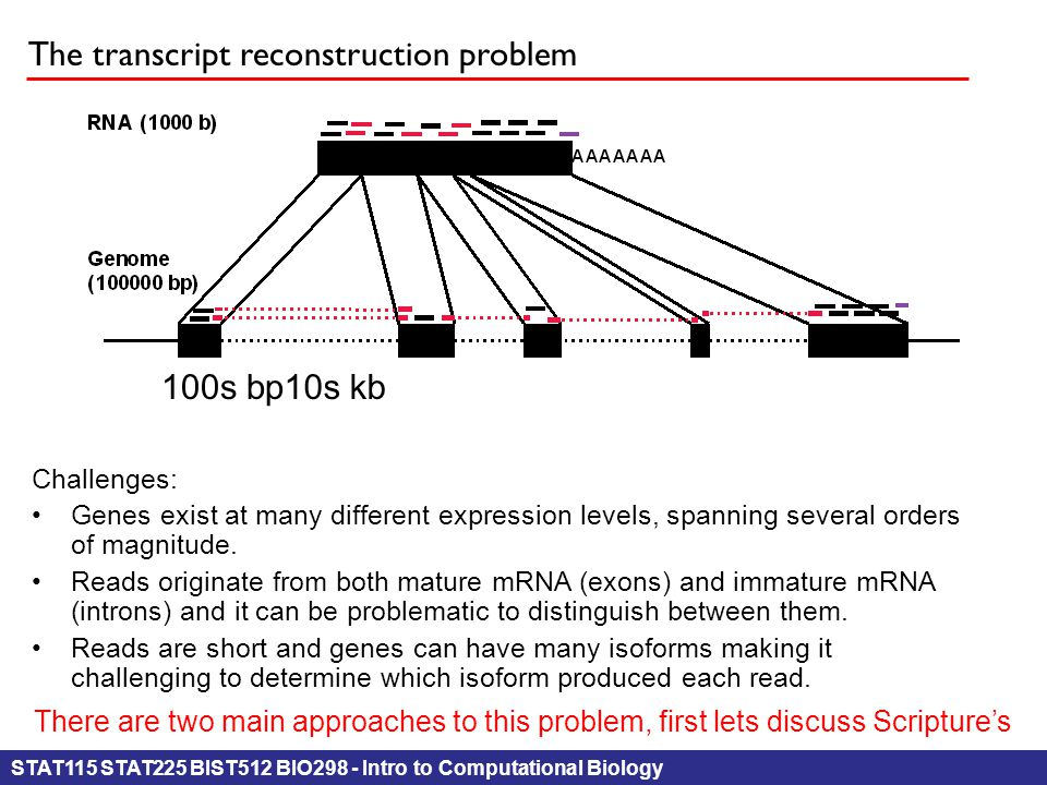 STAT115 STAT225 BIST512 BIO298 - Intro to Computational Biology The transcript reconstruction problem 10s kb100s bp Challenges: Genes exist at many different expression levels, spanning several ordersof magnitude.