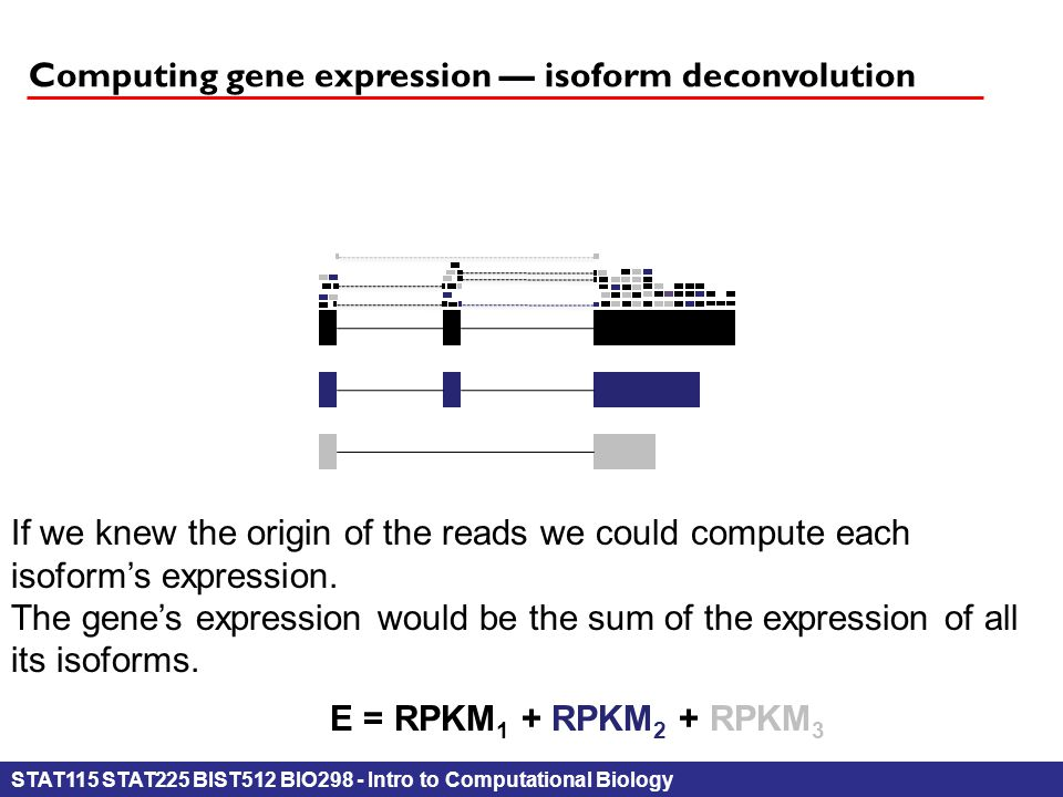 STAT115 STAT225 BIST512 BIO298 - Intro to Computational Biology Computing gene expression — isoform deconvolution If we knew the origin of the reads we could compute each isoform's expression.