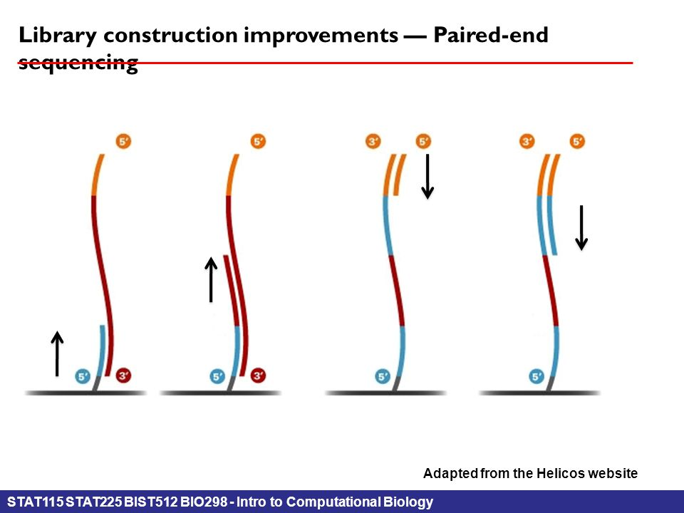 STAT115 STAT225 BIST512 BIO298 - Intro to Computational Biology Library construction improvements — Paired-end sequencing Adapted from the Helicos website