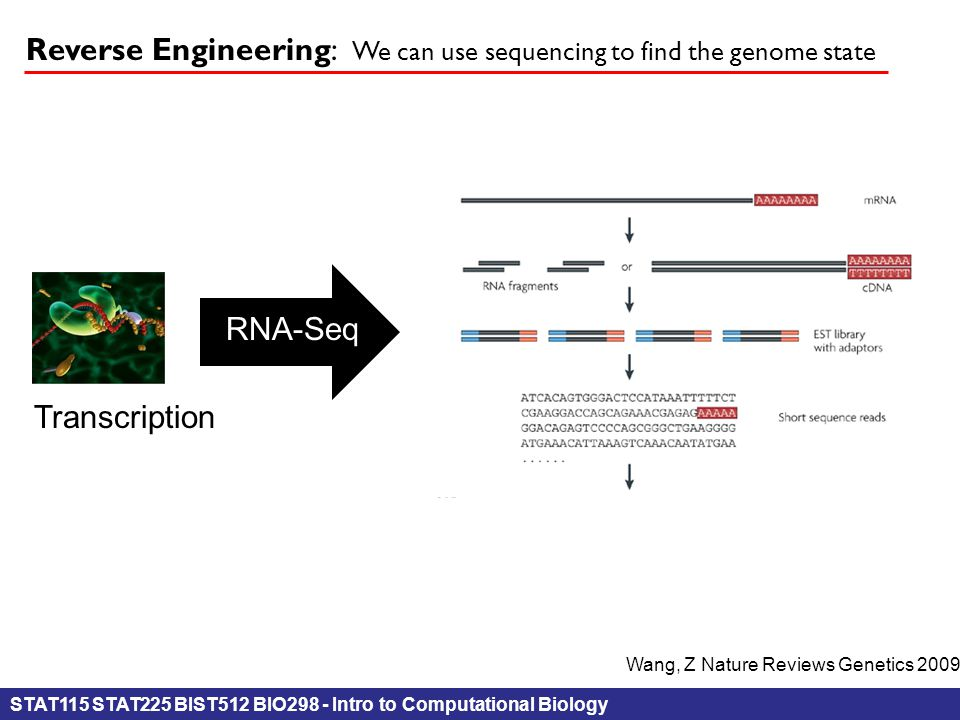 STAT115 STAT225 BIST512 BIO298 - Intro to Computational Biology Reverse Engineering: We can use sequencing to find the genome state RNA-Seq Transcript