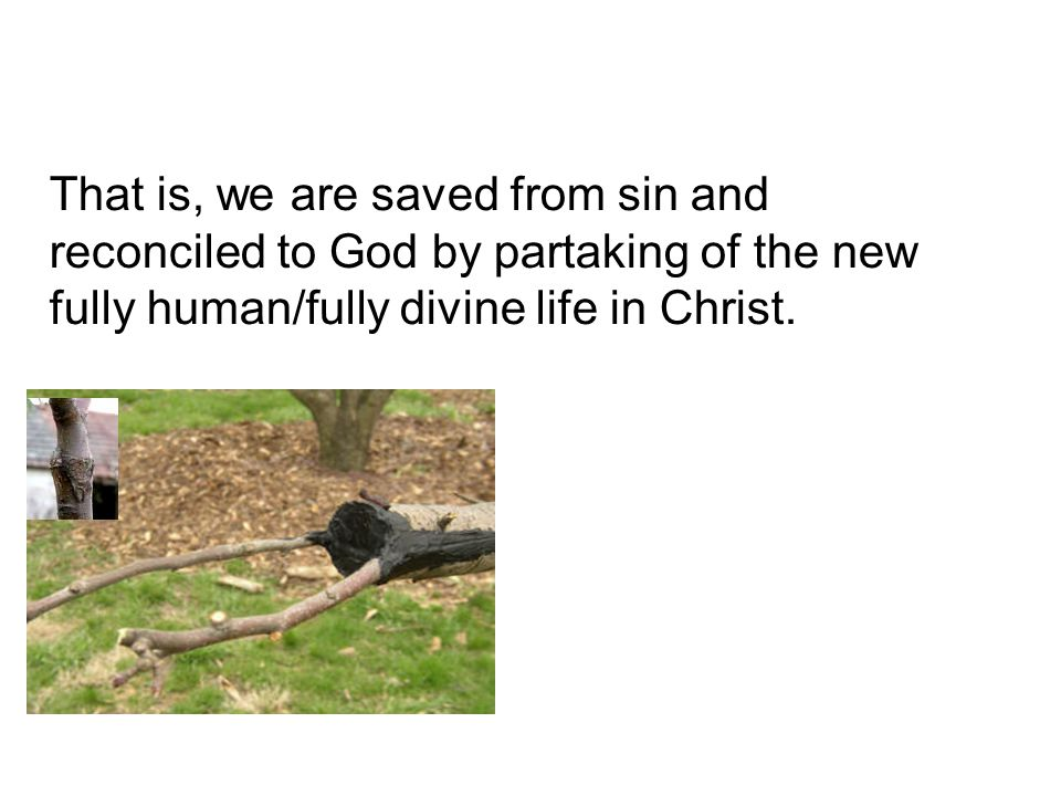 That is, we are saved from sin and reconciled to God by partaking of the new fully human/fully divine life in Christ.