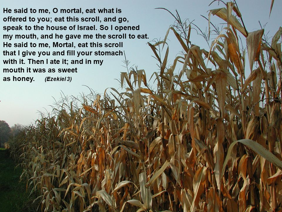 He said to me, O mortal, eat what is offered to you; eat this scroll, and go, speak to the house of Israel.