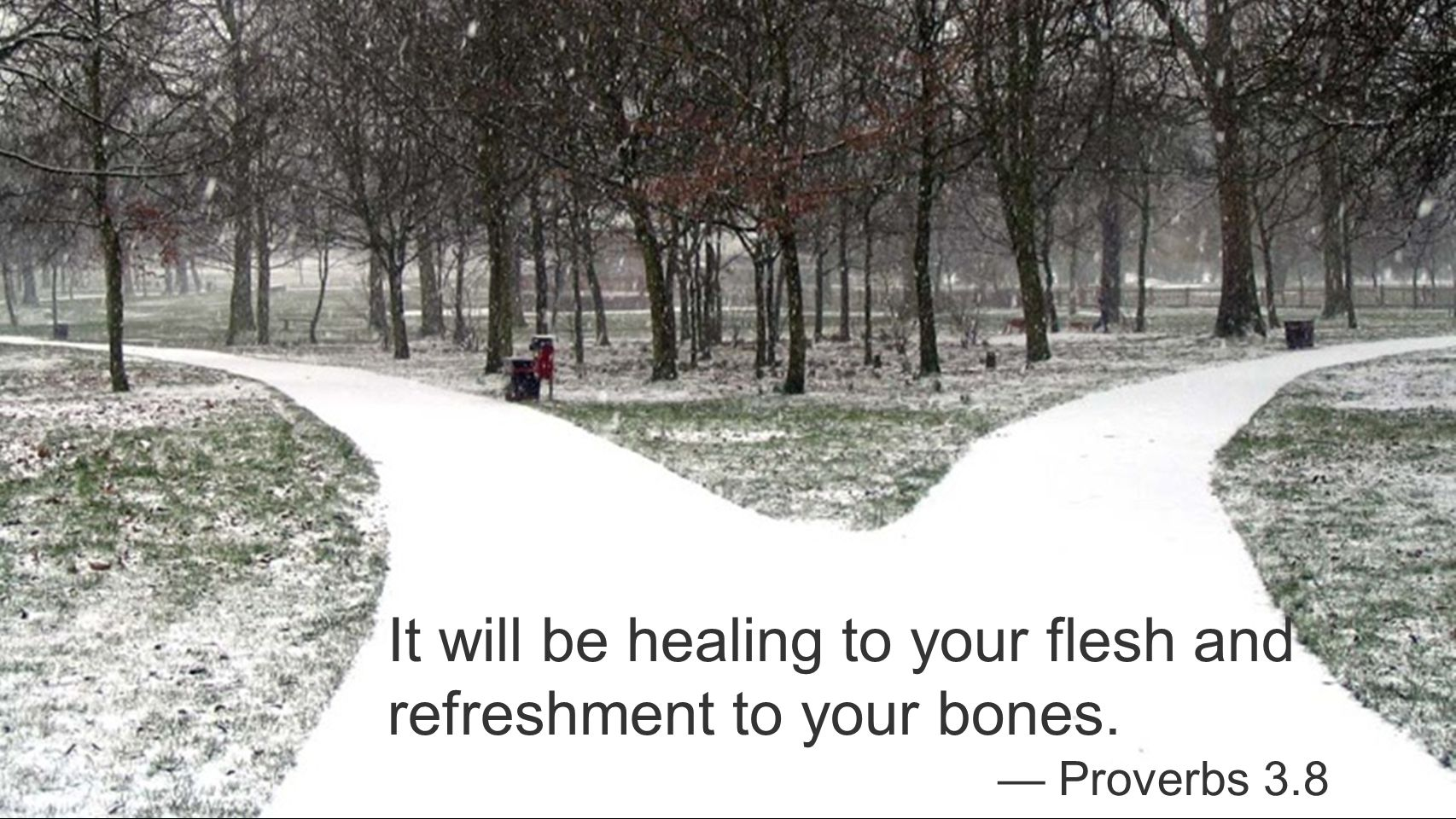 It will be healing to your flesh and refreshment to your bones. — Proverbs 3.8