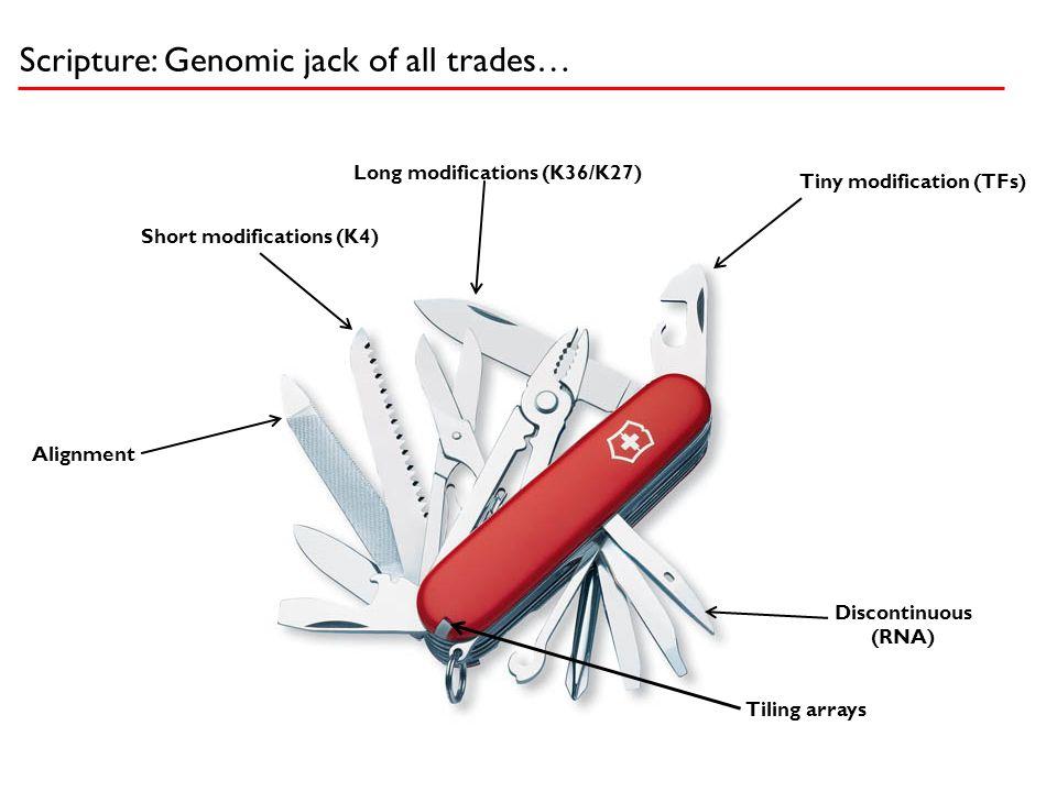 Tiny modification (TFs) Long modifications (K36/K27) Short modifications (K4) Discontinuous (RNA) Alignment Tiling arrays Scripture: Genomic jack of a