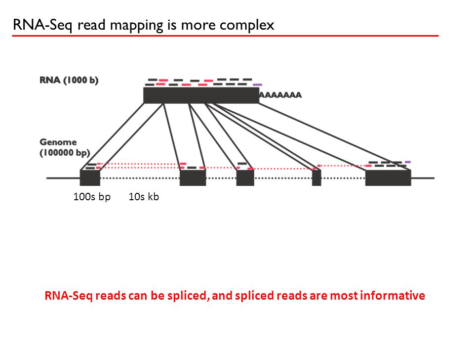 RNA-Seq read mapping is more complex 10s kb100s bp RNA-Seq reads can be spliced, and spliced reads are most informative