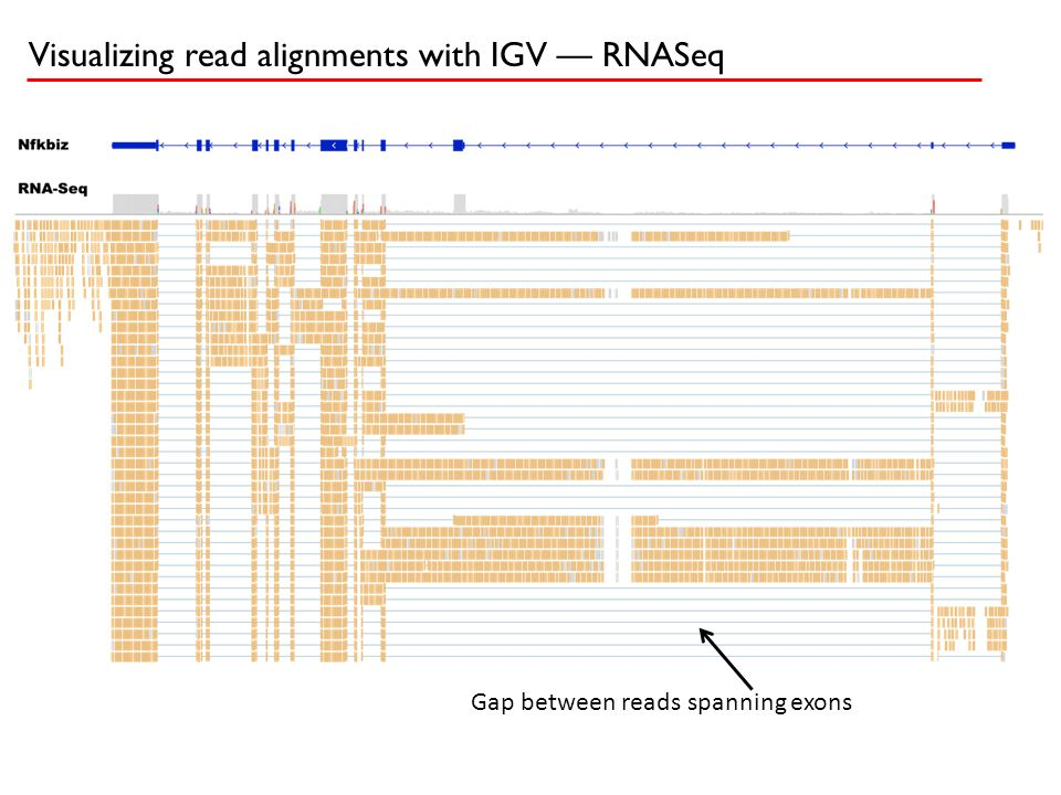 Visualizing read alignments with IGV — RNASeq Gap between reads spanning exons